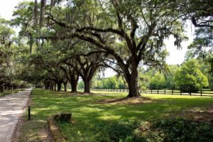 allee of oaks at one of the charleston plantations