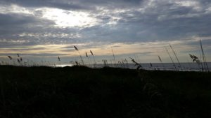 beach grass at sunset on isle of palms, one of the beaches near charleston sc