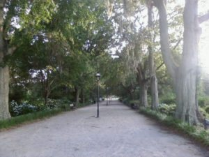 central walkway to the pond at hampton park charleston sc